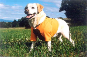 WORLD'S FINEST HUNTING DOG VEST