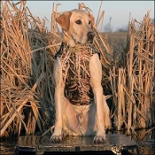 AVERY STANDARD WATERFOWL CAMO HUNTING VEST